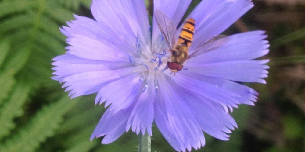 24 Blommor och bin